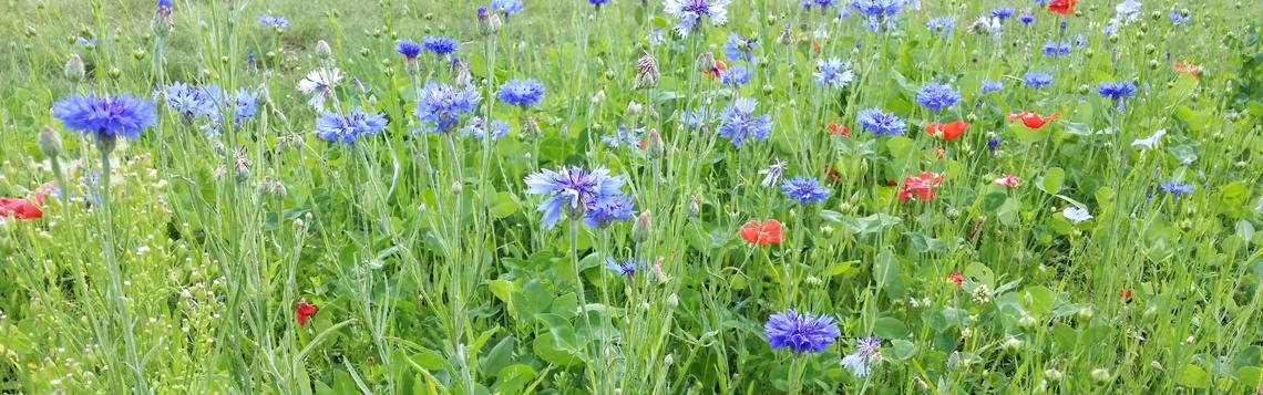 Blomsteräng-exempel