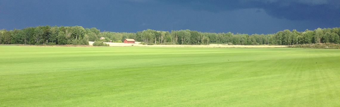 Startbild-gräsfält