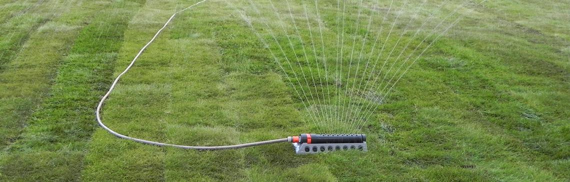 Startbild-vattning-rullgräs
